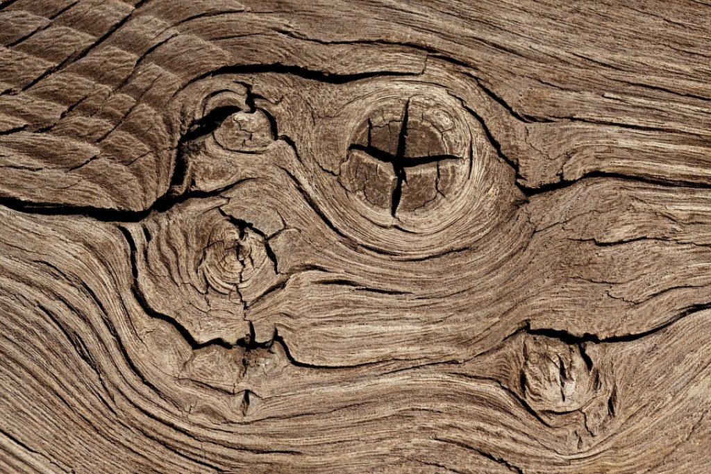 How to Identify and Remedy Timber Decay